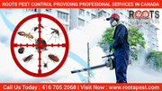 Roots Pest Control: Providing Professional Services in Canada