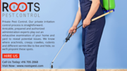 Roots Pest Control: Lowest,  Cheapest Price in Canada