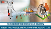 Pest Control Services in Ontario | Protect Your Home Now!